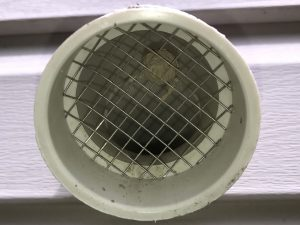 Wasp Nest Inside Vent Screen