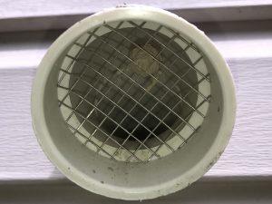 Wasp Nest Inside Vent Screen